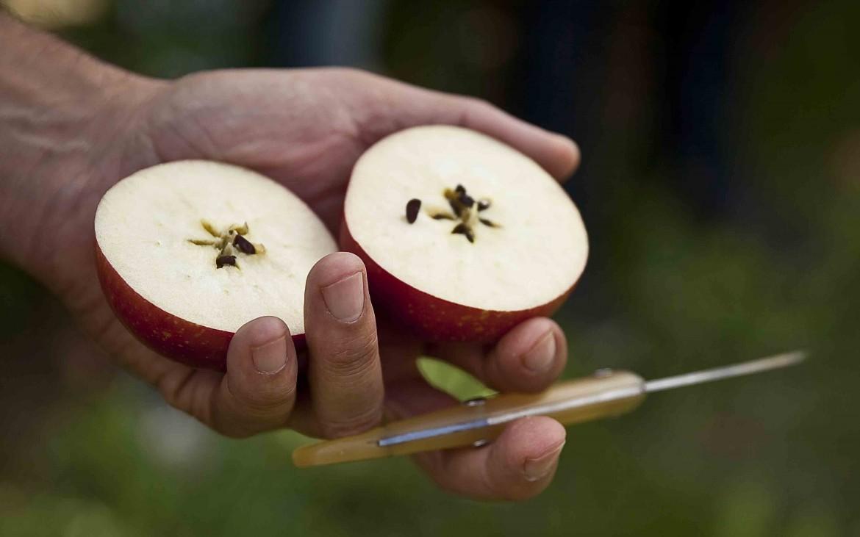 Coeur de pomme coupée en 2