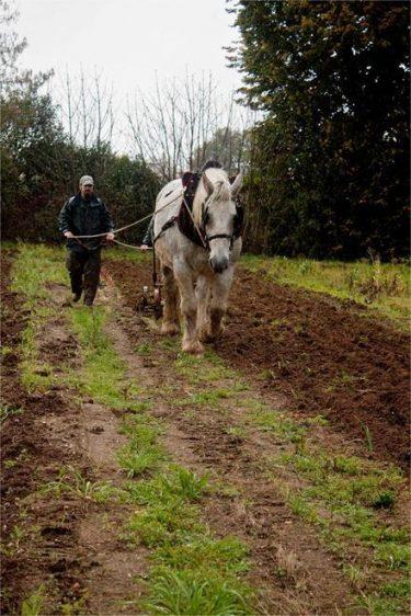 Labours au cheval dans le jardin d'Alain Passard au château du Gros-Chesnay à Fillé-sur-Sarthe