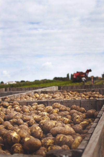 Primeurs de noirmoutier comment invente t on une nouvelle - Comment cuisiner les pommes de terre de noirmoutier ...