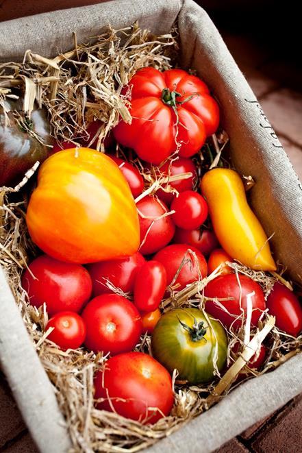 Noir de Crimée, Cœur de bœuf, Garance (tomates rondes), Pepe (tomates cerise rondes), Green Zébra, Trilly (tomates cerises allongées)