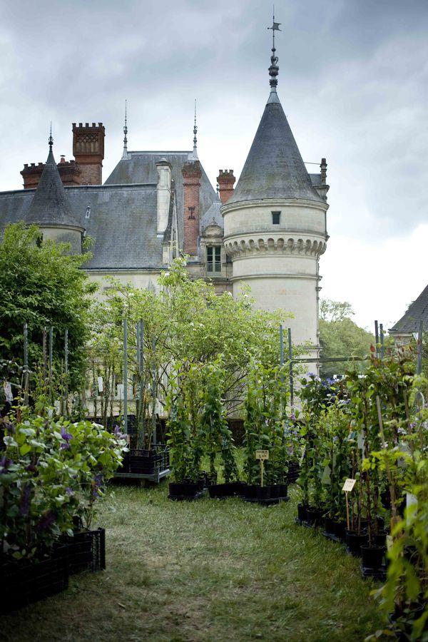 Château de la Bourdaisière fête des plantes 2