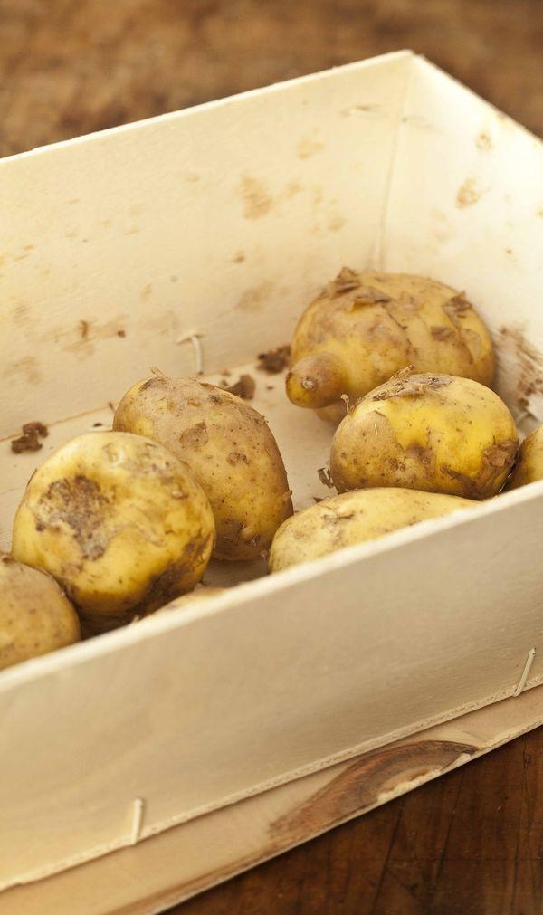 pommes de terre primeur bonnottes de Noirmoutier en cagette de bois