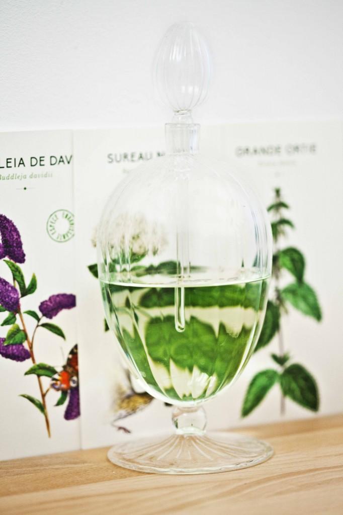 Décoration flacon de verre à parfum et fiches plantes de Noé 1
