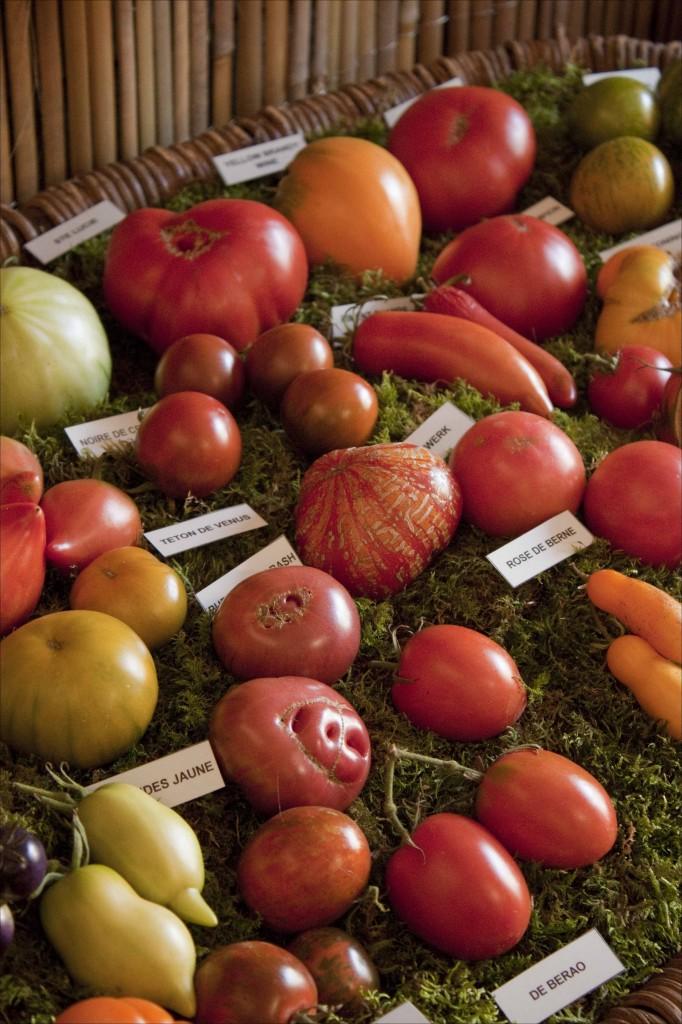 Echantillon de tomates (2)