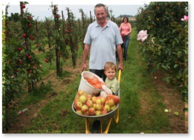 Homme et brouette de pommes ANPP