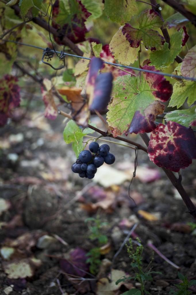 Devaux Vignes 21
