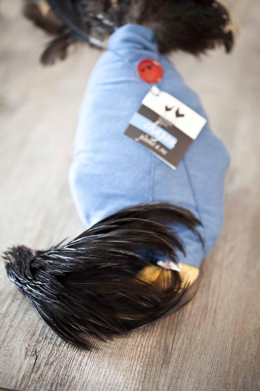 Le chapon noir emmailloté dans son torchon bleu