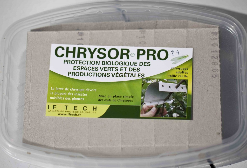 Chrysor Pro 1