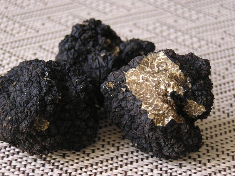Truffes de Bourgogne ou Tuber Uncinatum