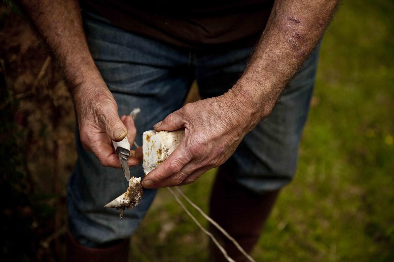 Nettoyer le pied du champignon avant de le placer dans son panier