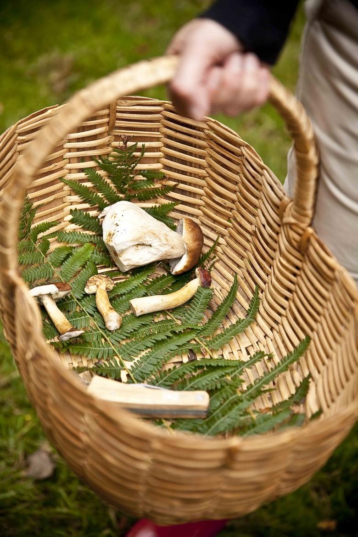 Ainsi ton panier et les autres champignons qui s'y trouvent sont toujours propres