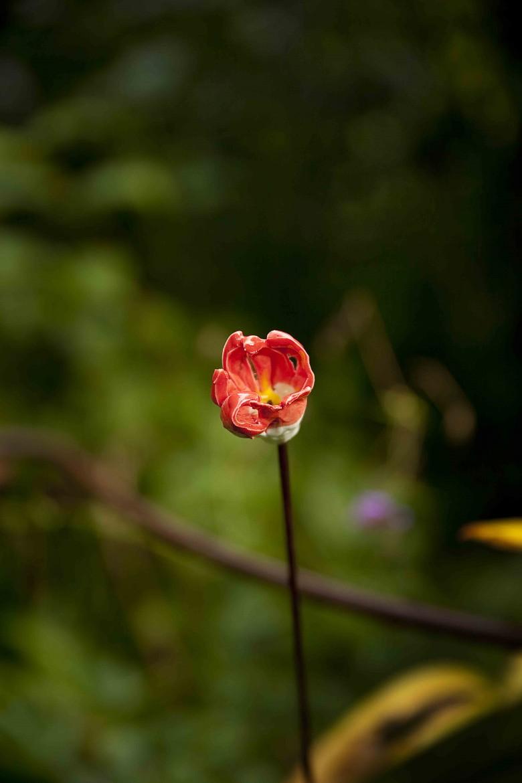 Le Jardin Retiré Bagnoles de l'Orne 19c