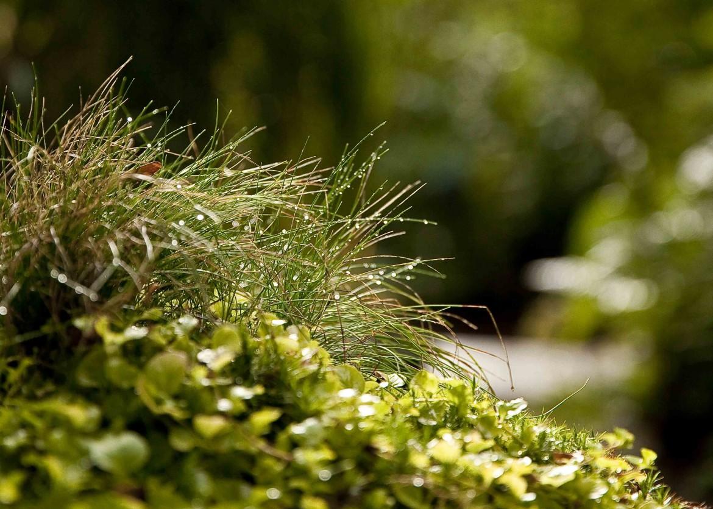 Le Jardin Retiré Bagnoles de l'Orne 4c