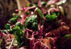 Salade de chou rouge et cresson, lardons pour les carnivores