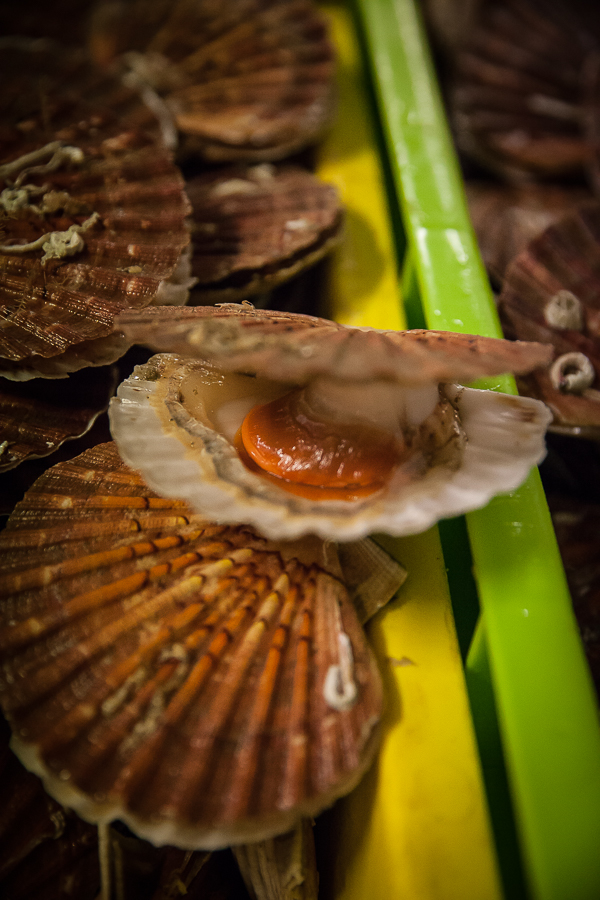 Saint jacques en sabayon de moutarde truff e les st - Cuisiner le corail des coquilles saint jacques ...