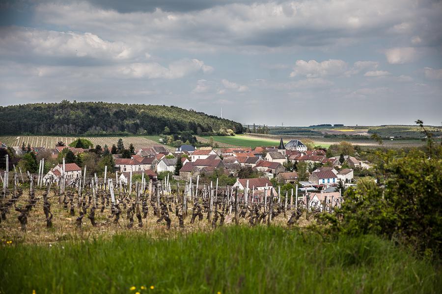 Bourgogne Claire Naudin©AnneDemayReverdy06