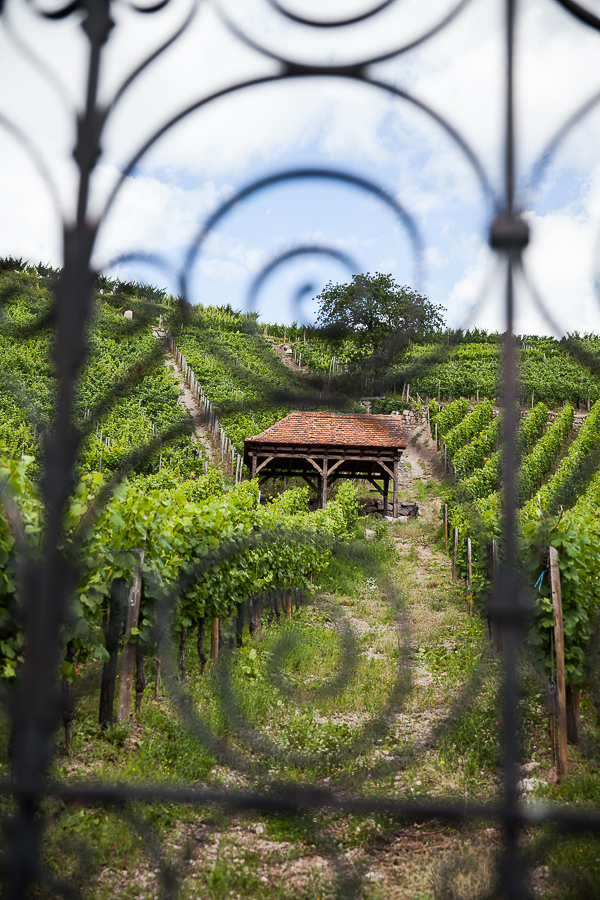 Les Rieslings vins d'Alsace©AnneDemayReverdy104