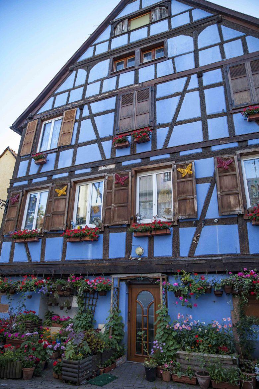 Les Rieslings vins d'Alsace©AnneDemayReverdy118