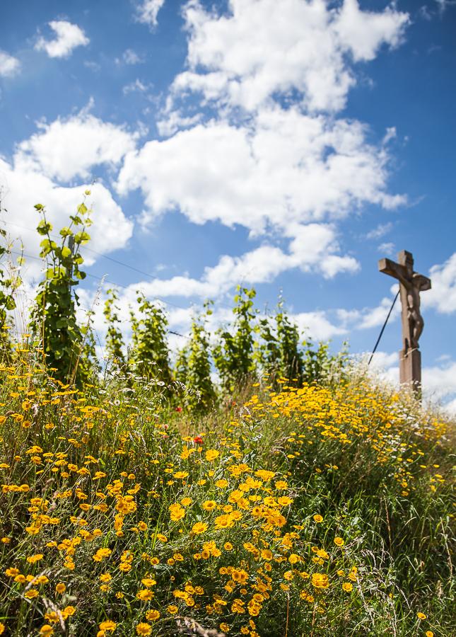 Les Rieslings vins d'Alsace©AnneDemayReverdy57