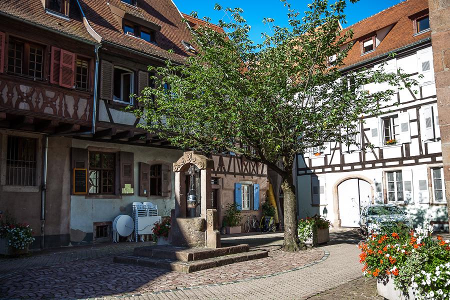 Les Rieslings vins d'Alsace©AnneDemayReverdy72