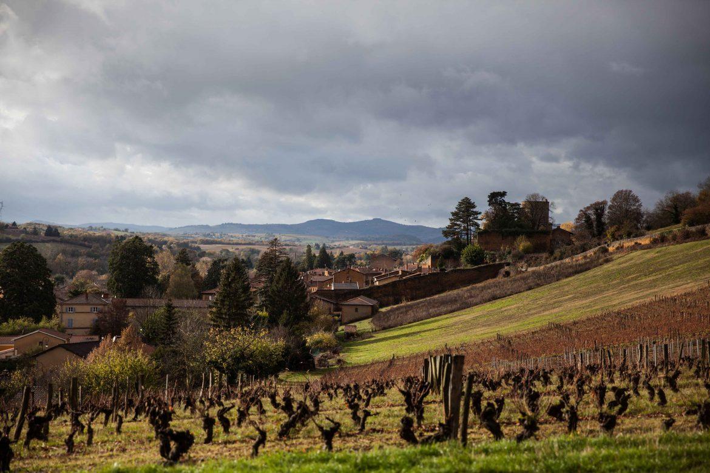 Vue des vignes du domaine chasselay en Beaujolais