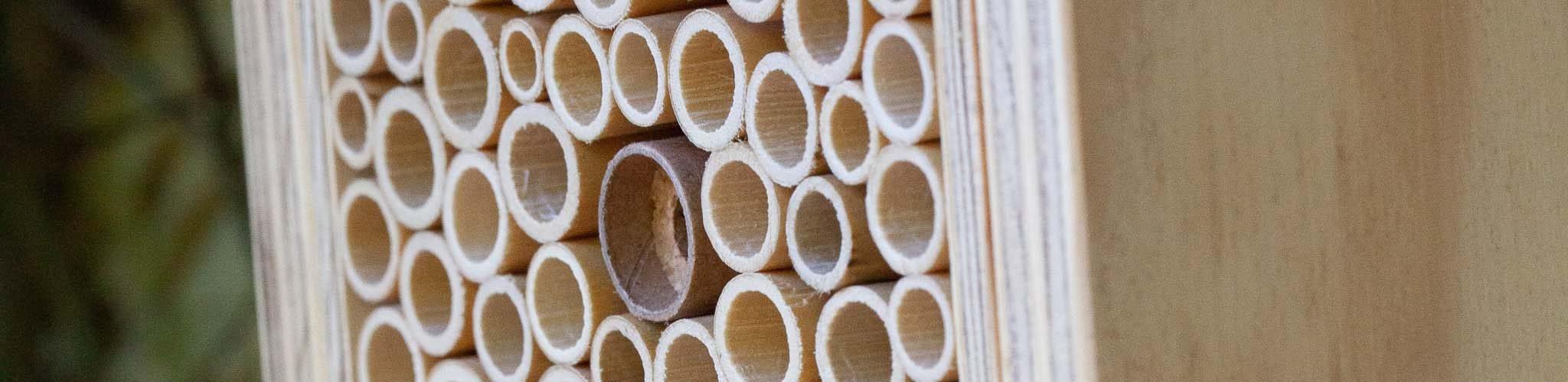 abeilles sauvages maçonnes et BeeHome