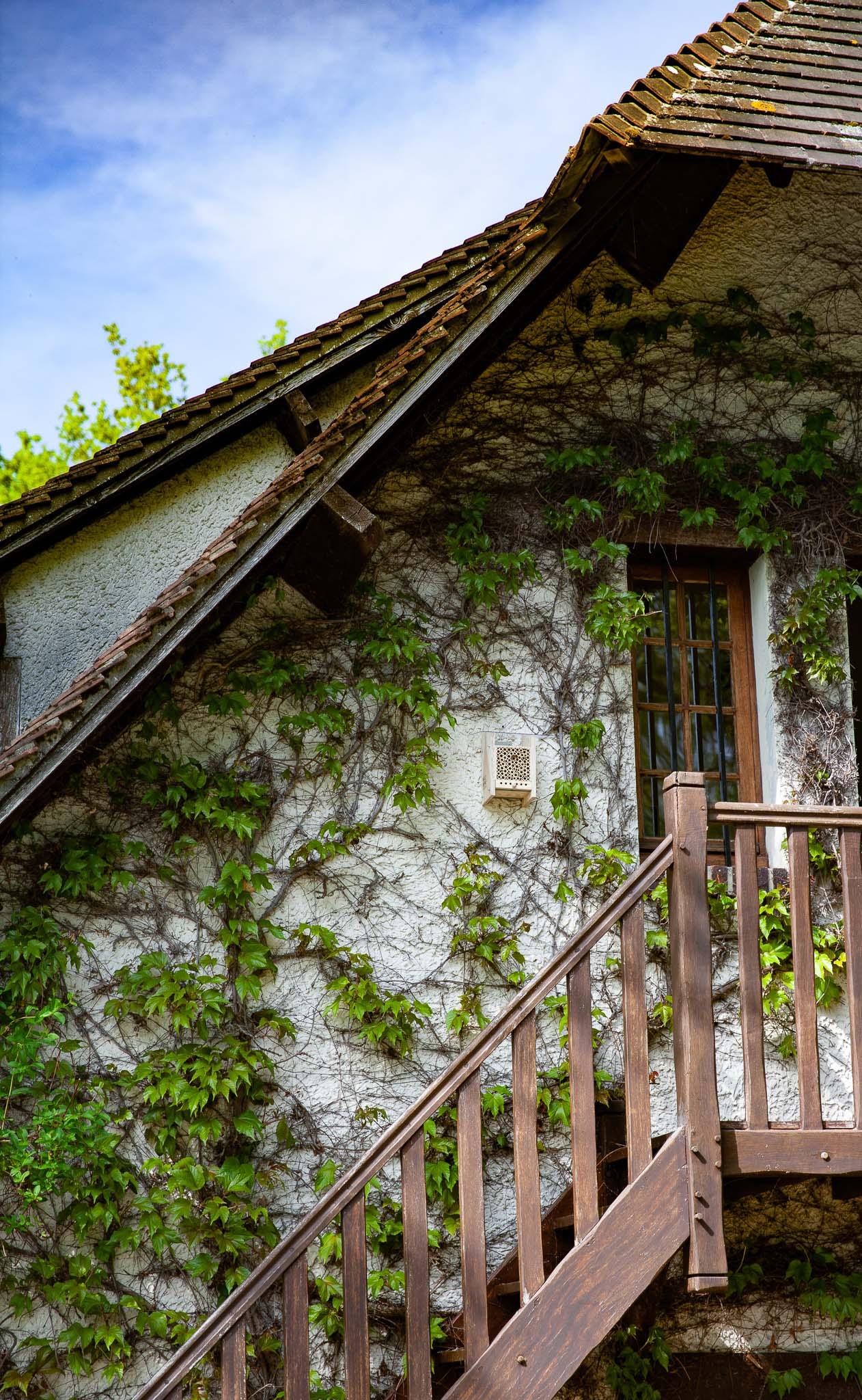 Beehome accrochée sur une maison dans la vigne vierge