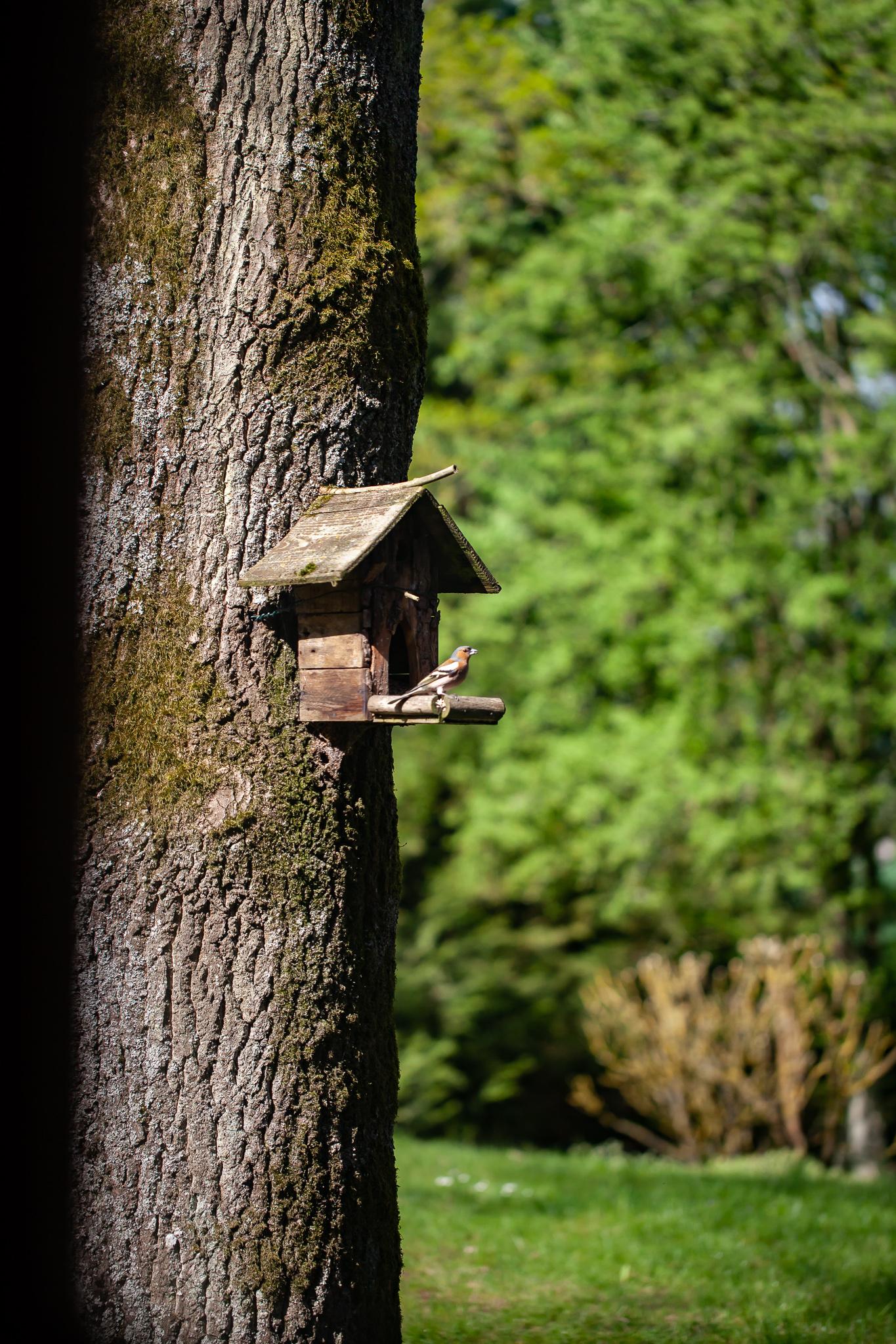 larbre, le nichoir et les oiseaux du jardin