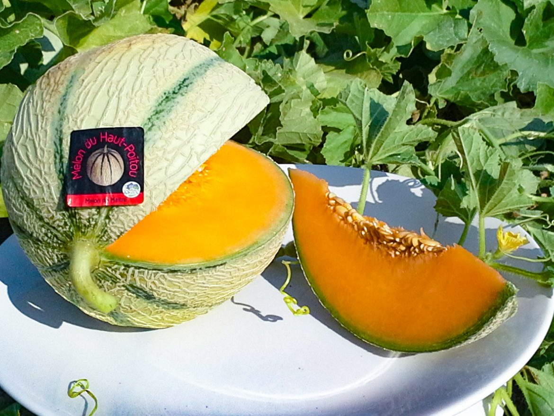 Melon du haut-poitou IGP coupé
