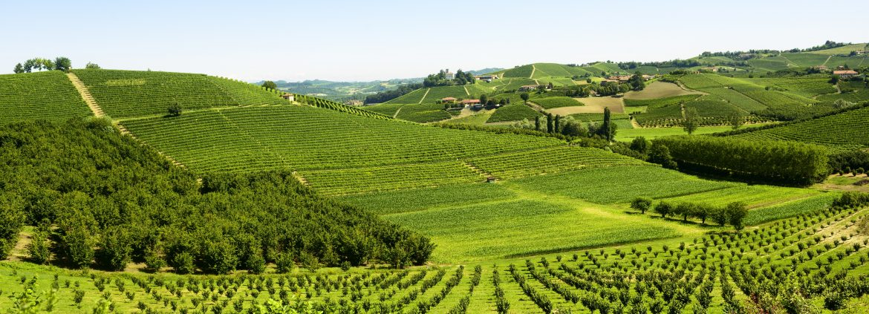 Paysages de vignes et de noisetiers dans le Langhe du Piémont