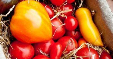 cageot de tomates anciennes et nouvelles