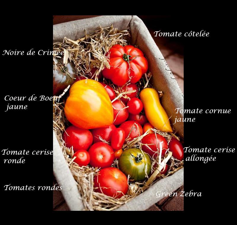 Noms des tomates anciennes et nouvelles