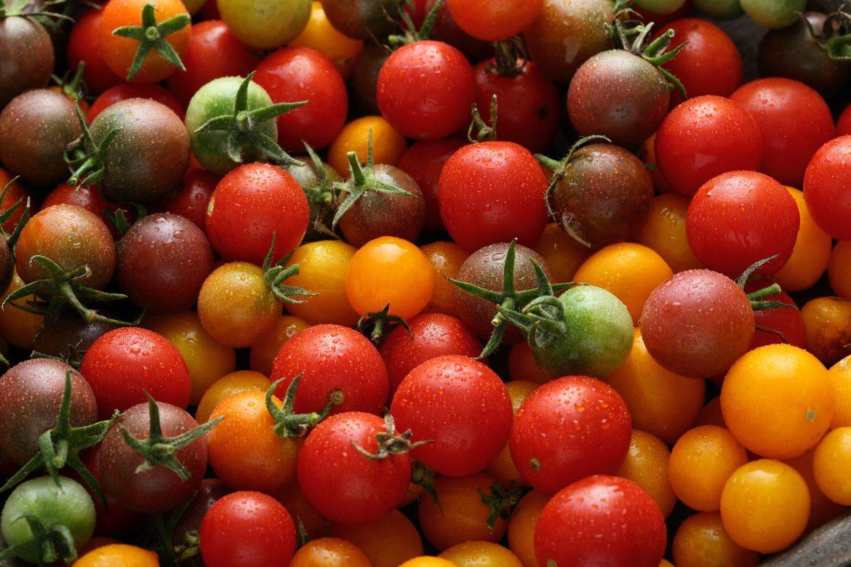 Tomates cerise multicolores