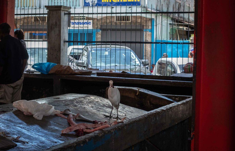Héron au marché couvert de Victoria à Mahé Seychelles