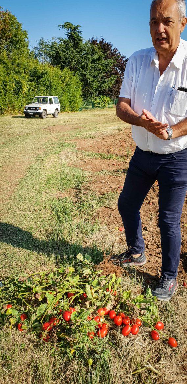 Ugo Peruch, chef agricole de Mutti