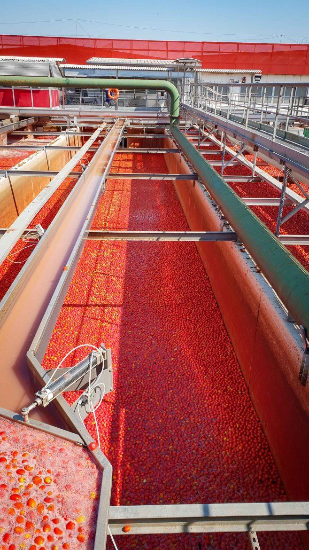 Une piscine de tomates Mutti