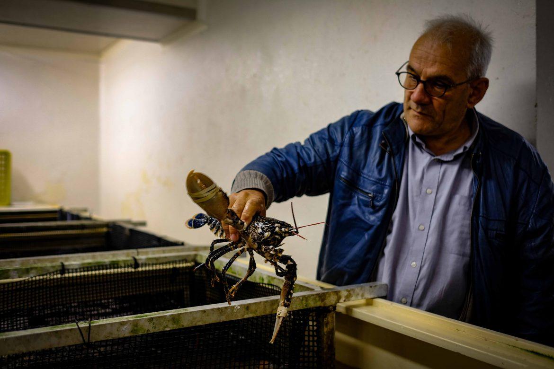 homard dans un vivier montré par Christian Cloutour directeur de l'OPPAN