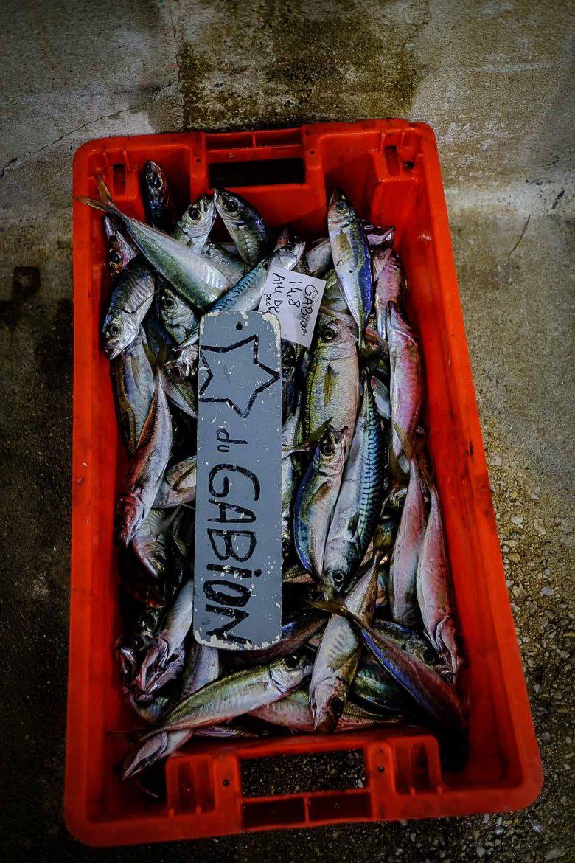 Les poissons d'un lot du bateau Etoile du Gabion