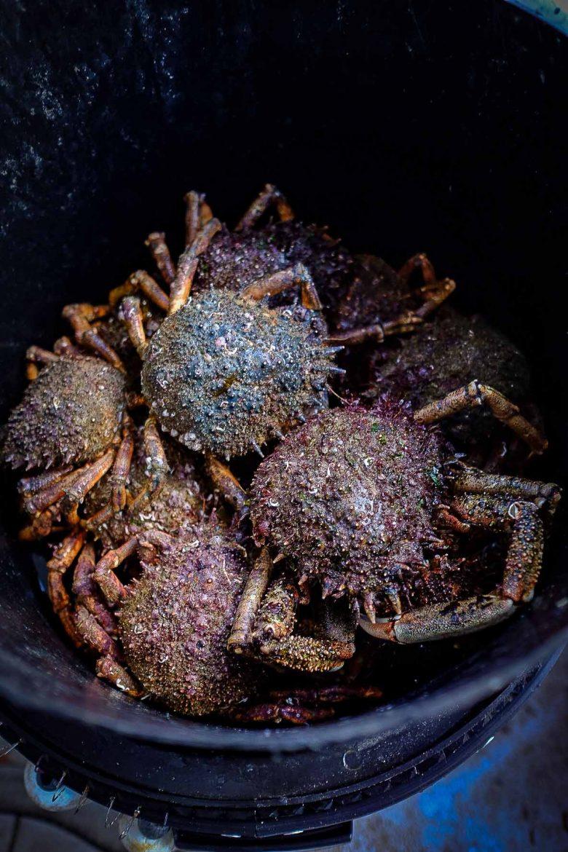 Araignées de mer en seau