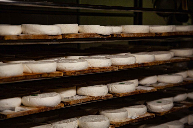 Reblochon séchant sur planches d'épicéa à la ferme agnellet