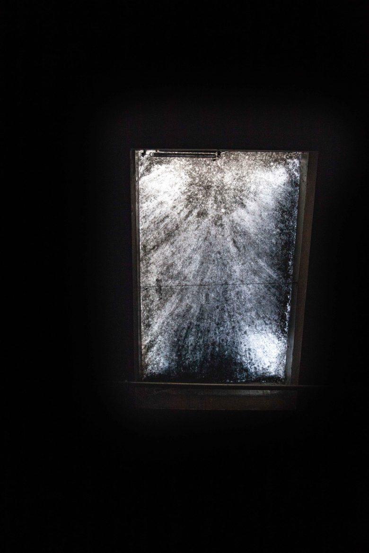 Le champignon microscopique torula Compniacencis sur une fenêtre