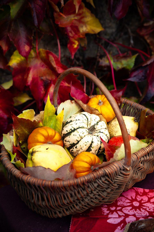 Courges, coings et potirons dans un panier d'automne