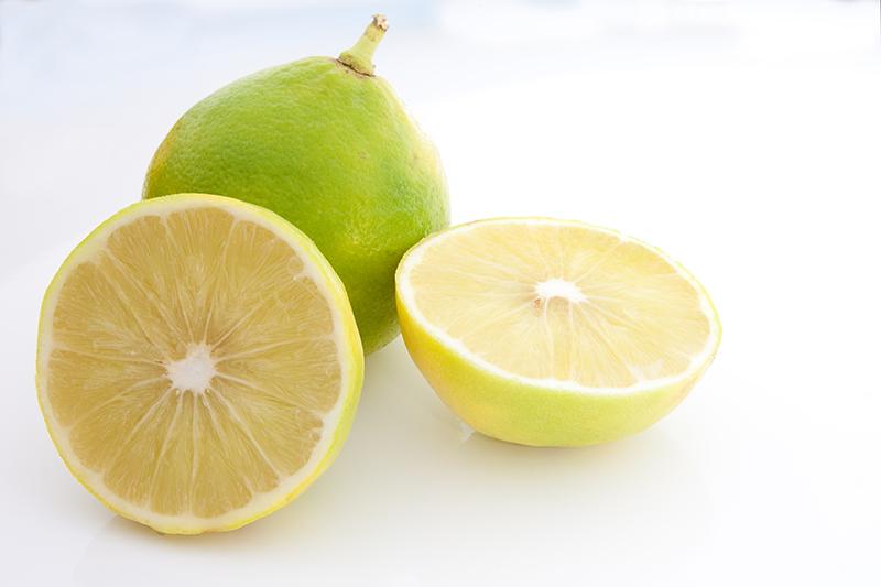 Le citrus bergamia ou la bergamote véritable