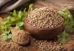 La coriandre en feuilles, coriandre fraîche, ou en grains, les graines de coriandre, entières ou moulues