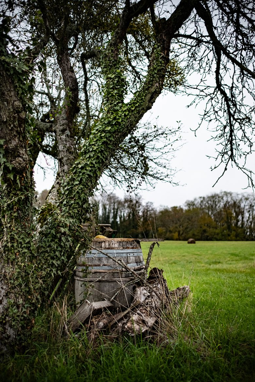 Trenal champs du Jura