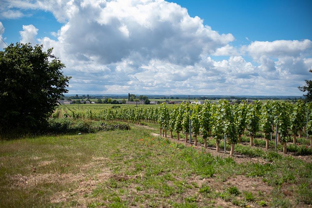 La vallée de la Loire depuis le point haute de la rive nord, AOC Saint-Nicolas-de-Bourgueil