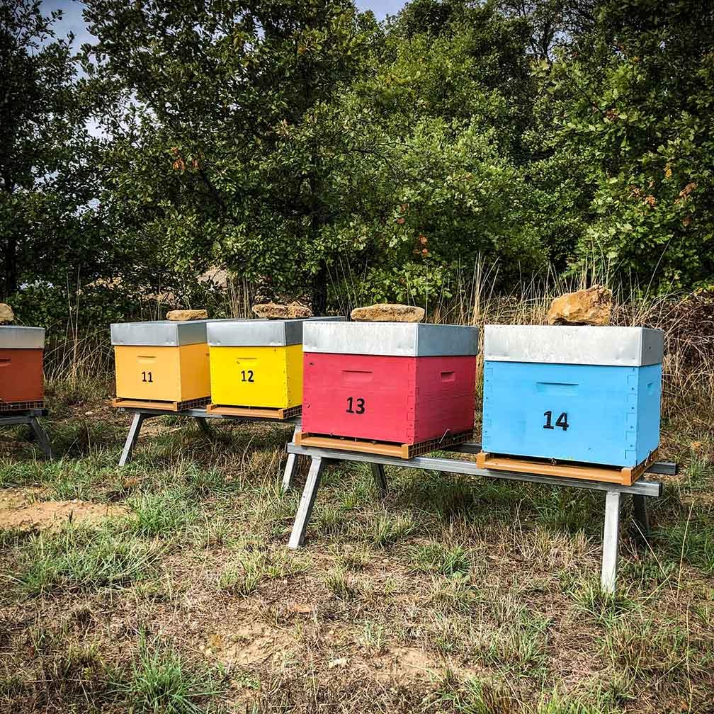Ruches et miel sur le Domaine Leos à l'Isle sur la Sorgue