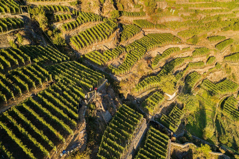 Le vignoble de Sassela en Valtellina AOP, des vignes sur terrasses accrochées aux pentes