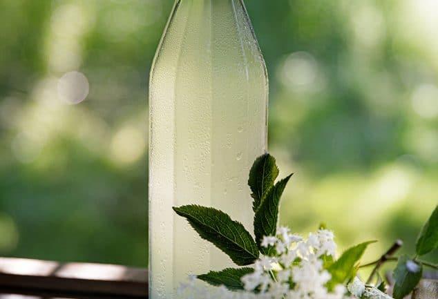 Recette de pétillant naturel de fleurs de sureau ou Champagne des fées, boisson fermentée aux fleurs