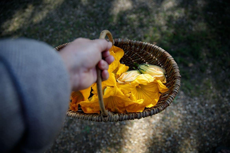 Panier de fleurs de courgettes